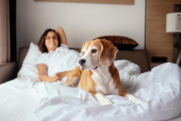 Pies, mimo niewątpliwej inteligencji i wielu zalet, nie potrafi myśleć abstrakcyjnie. Nie będzie mu więc przykro, że musi spać sam - pod warunkiem, że nie będzie się to dla niego wiązało z niezrozumiałą stratą. Najważniejsze jest konsekwentne działanie właściciela.