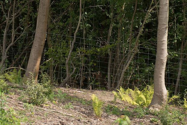 Wysoka siatka dla dzikich zwierząt jest przeszkodą nie do sforsowania. Deweloper zapewnia, że w wielu miejscach zostały pozostawione prześwity, by zwierzęta mogły znaleźć drogę do lasu.