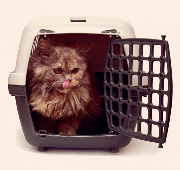 Wybierz transporter, który będzie wytrzymały, łatwy do umycia i bezpieczny dla kota.