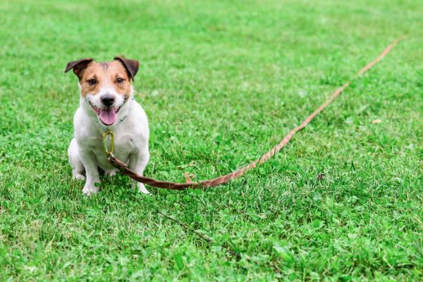 Dzięki odpowiedniej lince zapewnisz psu bezpieczeństwo i będziesz w stanie kontrolować jego zachowanie.