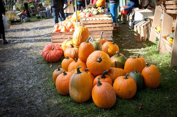 Dary Ziemi to wydarzenie, podczas którego możemy kupić ekologiczne owoce, warzywa i przetwory.