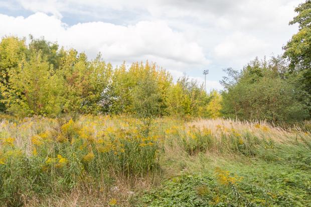 Teren, gdzie ma powstać nowy park. Na pozostałej części dawnego gospodarstwa ogrodniczego Okaz na Strzyży powstanie osiedle mieszkaniowe.
