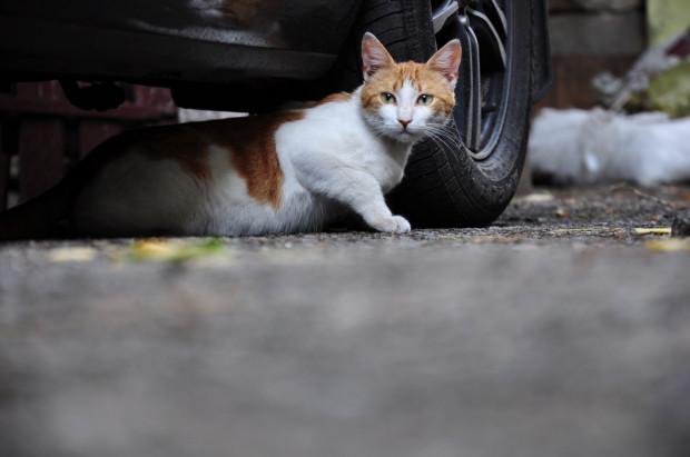 W Gdańsku wiele projektów dotyczyło sterylizacji kotów. Łącznie będzie realizowanych dziesięć z nich.
