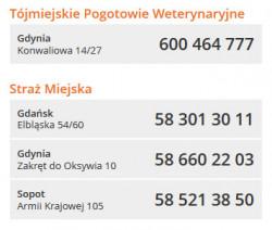 Warto zapamiętać te numery telefonów - jeśli znajdziemy ranne zwierzę, dzwońmy pod nie zawsze wtedy, gdy potrzebujemy wsparcia.