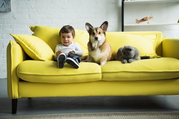 Sofa służyć ma wszystkim domownikom. Ma być nie tylko wygodna, ładna, ale też praktyczna i odporna na zniszczenia.