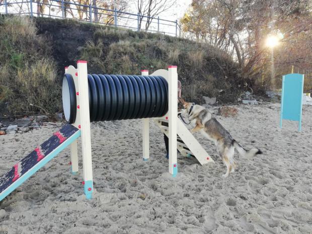 Tuba może być nie lada atrakcją dla psów.