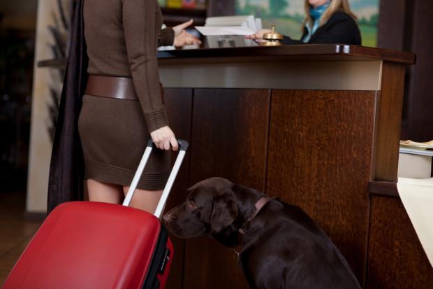 Urlop bez ukochanego zwierzaka? Niektórzy sobie tego nie wyobrażają i chętnie zabierają ze sobą psa na wczasy.