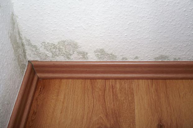 Grzyb pojawiający się w nowym mieszkaniu to jeden z częściej zgłaszanych problemów. Deweloperzy zwykle odpowiadają w takich sytuacjach, by więcej wietrzyć. Czasem to pomaga, ale zdarza się także, że przyczyną są wady budynku.