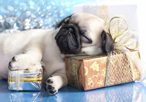 Mopsie Mikołajki to już czwarta edycja tej imprezy. Tym razem psy i ich opiekunowie spotykają się w klubie Medyk 2 grudnia.