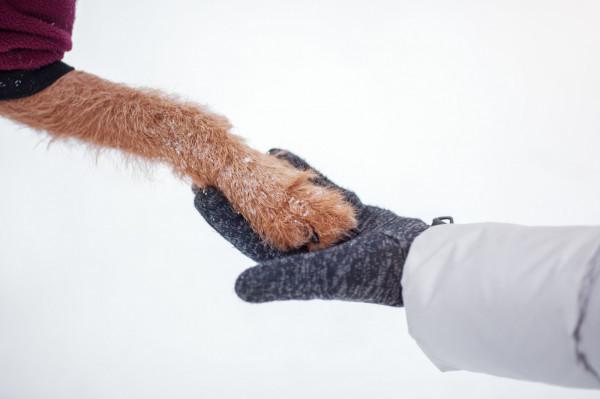 Podczas zimy psy wymagają dodatkowej pielęgnacji. Lód oraz sól mogą podrażnić ich łapki.