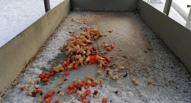 Strażnicy miejscy przypominają, że dla ptaków lepsze od chleba są np gotowane warzywa.