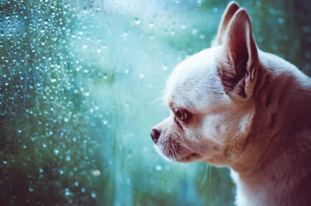 Psy doskonale wyczuwają nasze emocje, już samo to sprawia, że w przypadku naszego gorszego samopoczucia, także one czują się gorzej. Do tego dochodzi utrata bezpieczeństwa: zwierzaki nie lubią zmian.