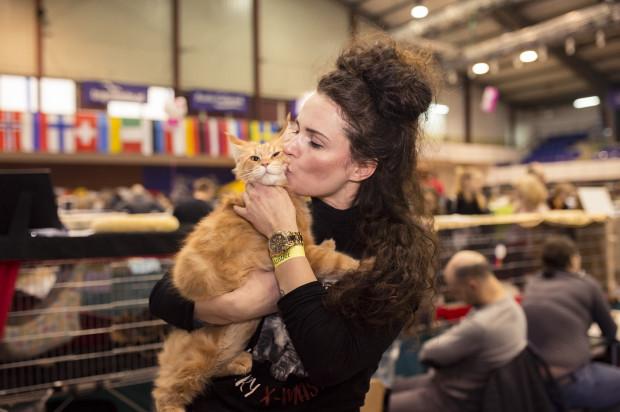 Miłośników kotów czeka Międzynarodowa Wystawa Kotów Rasowych w Hali AWFiS.