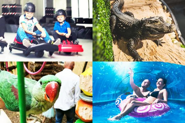W Aquacentrum Reda spotkamy egzotyczne zwierzęta, skorzystamy z oferty basenowej i wielu innych ciekawych atrakcji.