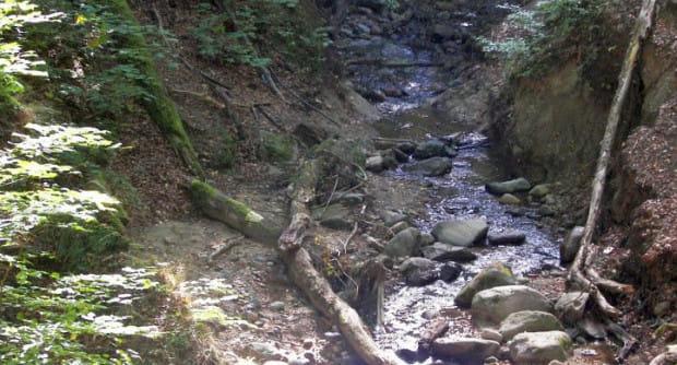 Potok Wiczliński może stać się atrakcją przyrodniczą, jak wiele innych w Trójmiejskim Parku Krajobrazowym.