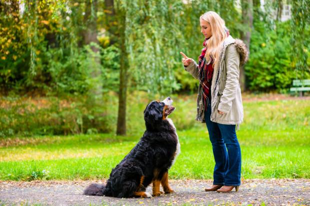 Podstawą do rozpoczęcia sportu z psem jest nauczenie go podstawowych manier.