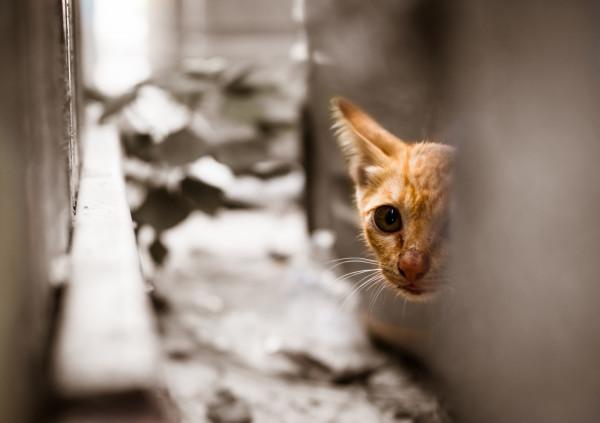 W roku 2019 wzrósł budżet miasta przeznaczony na działania związane z bezdomnymi zwierzętami.