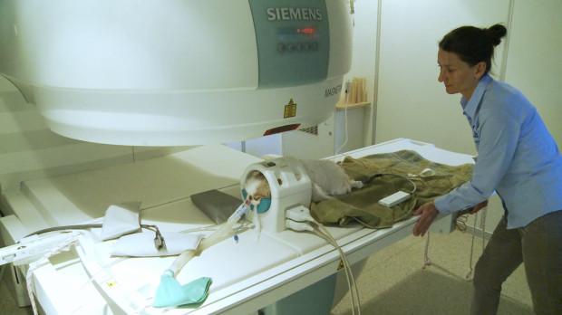 Kompleksowa opieka nad pacjentem podczas badania rezonansem magnetycznym