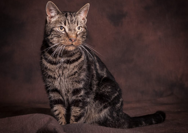 Avatar całe życie spędził w schronisku. Jest pięknym młodym kotem, ma jednak przewlekłe infekcje nosa i zatok. Czy taki detal może uniemożliwić mu znalezienie własnego domu?