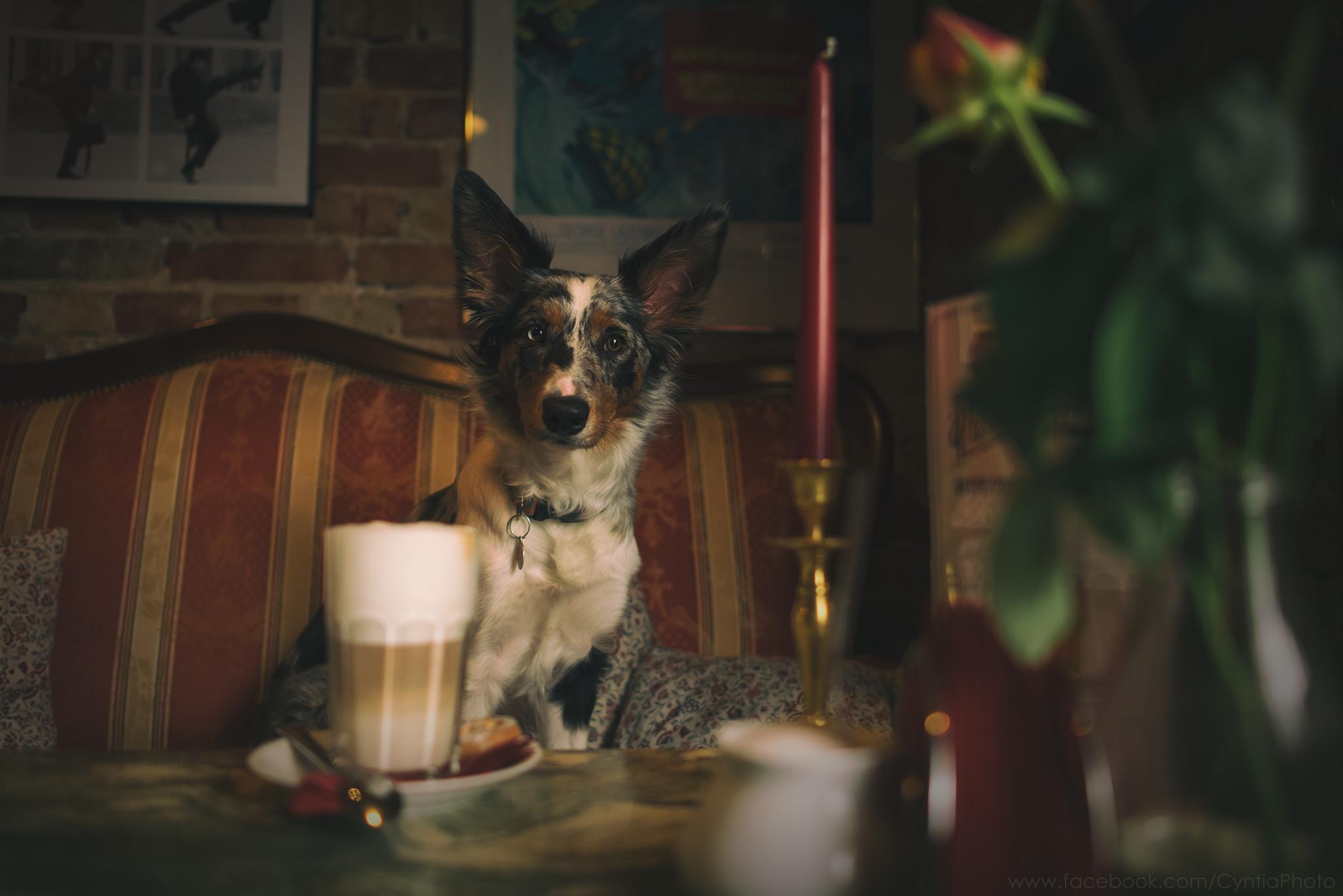 Где в Гданьске можно пойти в кафе со своим питомцем