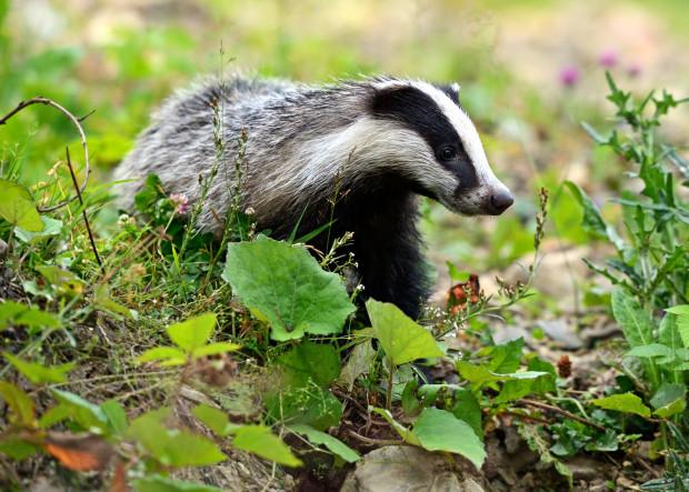 Wiosną na terenie Trójmiejskiego Parku Krajobrazowego można spotkać wyjątkowo dużo zwierząt.