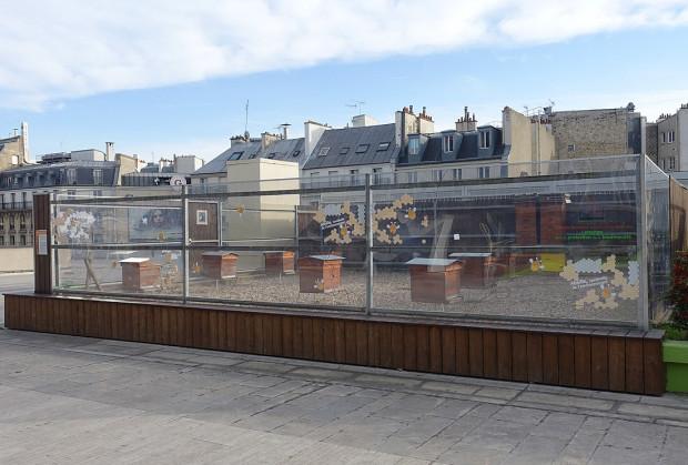Ule na dachach domów to powszechny widok w wielu europejskich miastach. Na zdjęciu ule na dachu kamienicy w Paryżu.