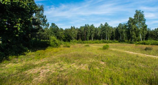 Teren, gdzie urzędnicy chcą dopuścić budowę obiektu handlowego znajduje się pomiędzy lasami Trójmiejskiego Parku Krajobrazowego.