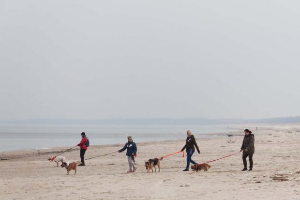Relacja ze spaceru z psami ze Schroniska Promyk.