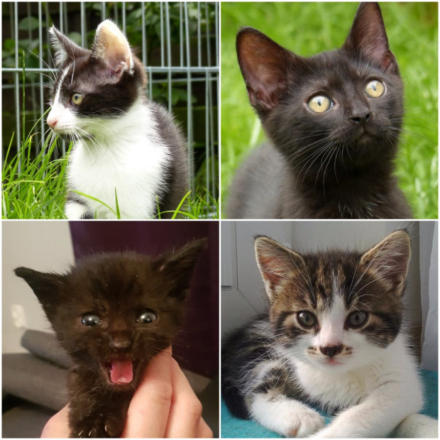 Kolejne kociaki z Opackiej szukają opiekunów.