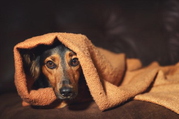 Pies to nie zabawka, ale czująca, żywa istota. Szanujmy jego granice i mądrze się nim opiekujmy.