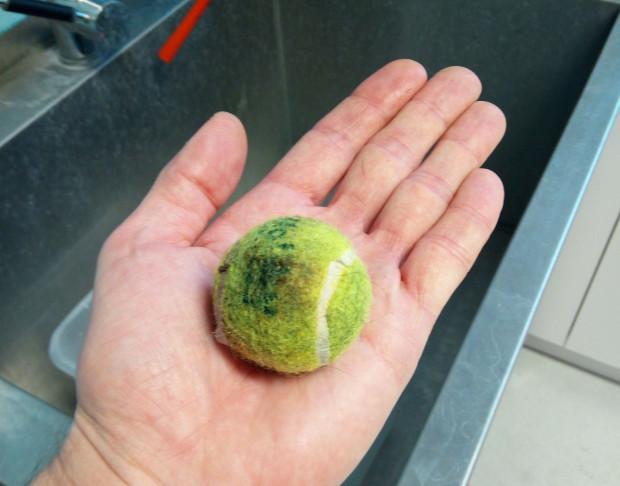 Przedmioty znalezione w przewodzie pokarmowym psa. Na zdjęciu: piłeczka połknięta w całości.