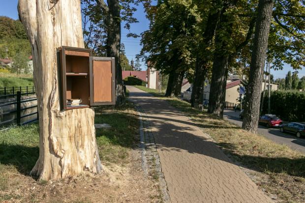 Biblioteczka w pniu wyschniętego kasztanowca działa przy Kanale Raduni, na trasie między Gdańskiem a Pruszczem Gdańskim.