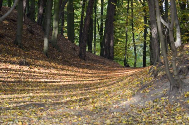 Lasy Oliwskie: czy powinny zostać wyłączone z prowadzenia w nich gospodarki leśnej? Tak uważa autor poniższego artykułu i założyciele fundacji Fidelis Siluas (Wierni Lasom).