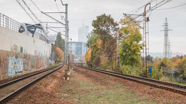 Drzewa stanowią także naturalną barierę przed hałasem.