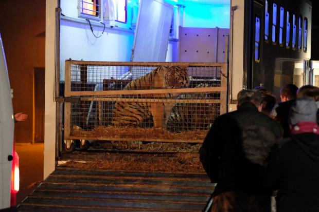 Zdaniem ekspertów zaniedbane zwierzęta mogły nie przeżyć podróży.