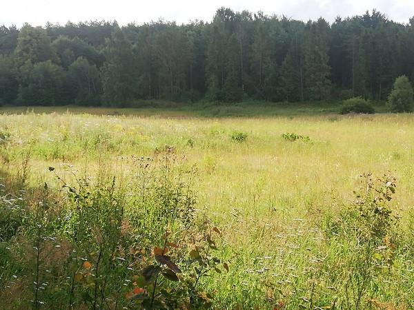 Na terenie Kaczych Buków nie brakuje terenów zielonych. Mieszkańcy tej części Gdyni obawiają się, że nowa zabudowa znacznie zmniejszy ich powierzchnię.
