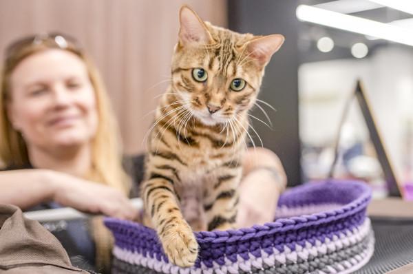 Galeria Metropolia zaprasza na pokaz kotów.