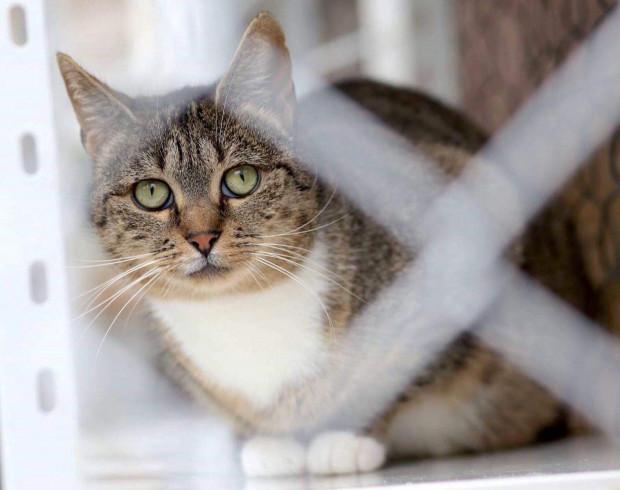Lula ma szereg cech, które powinny zachęcić tych, którzy myślą o adopcji kota. Jest bardzo łagodna i przyjacielska wobec innych kotów.