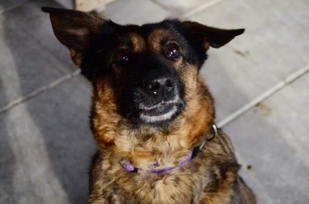 Mańka szuka domu, który chciałby podjąć się pracy z nią - nauki skupienia przede wszystkim - i który wie, że psu czasem trzeba pomóc zrozumieć pewne kwestie.