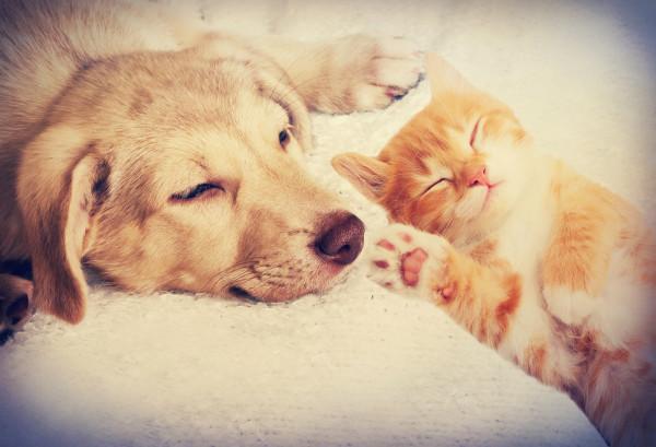 Pies i kot w jednym domu - przepis na przyjaźń czy na niekończące się problemy?