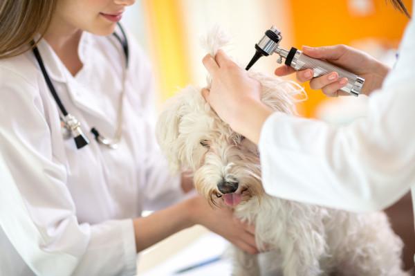 Niektóre lecznice weterynaryjne tymczasowo zmieniają tryb przyjęć lub godziny pracy, ale nadal świadczą usługi i dbają o pacjentów.