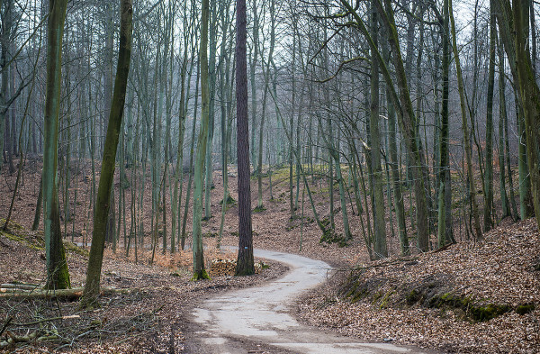 Od piątku 3 kwietnia nie można wchodzić do lasów.