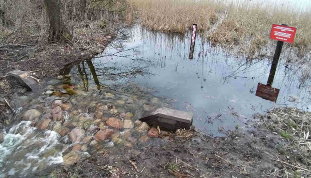 Progi drewniano-kamienne stabilizują lustro wody przy jeziorach w powiecie tucholskim. Na zdjęciu próg przy jeziorze Żalno.