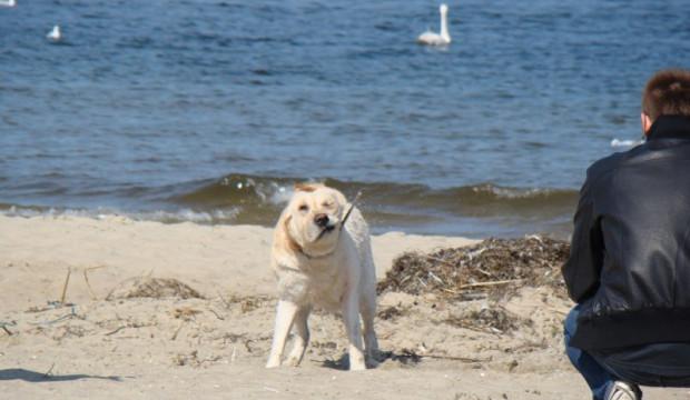 Czy po Gdyni przyjdzie czas na Sopot i Gdańsk? Tu mieszkańcy też chcieliby wyznaczenia miejsc, gdzie wolno wyprowadzać na plaży psy w sezonie.