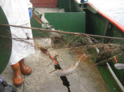 W stare sieci nadal wpadają ryby.